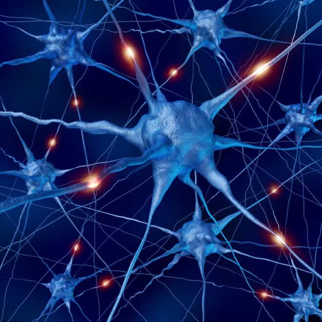 Neurons in the Brain NAET Dubai