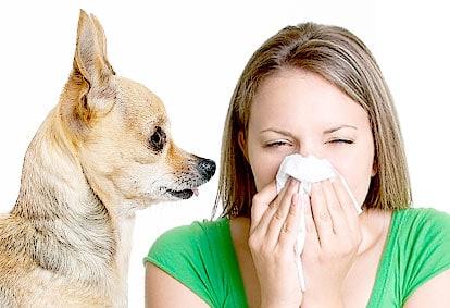 Sneezing in Pet Allergy - NAET Dubai