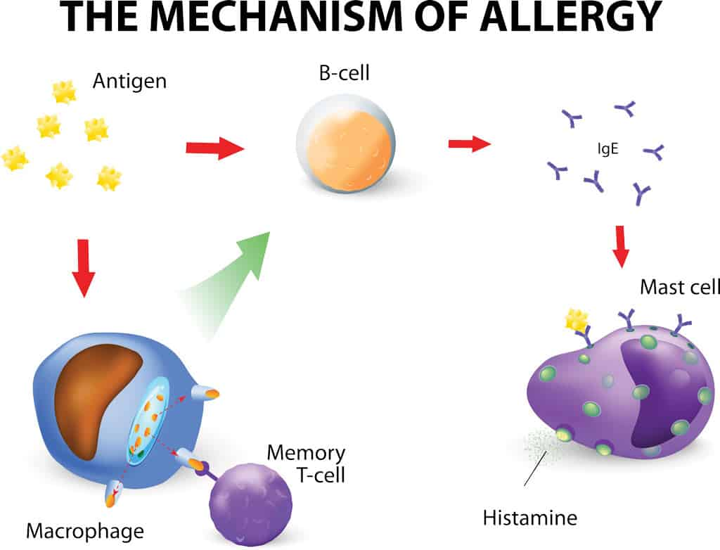 Cycle of Allergy NAET Dubai