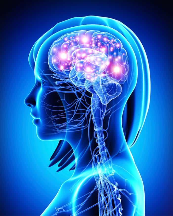 Human Brain NAET Dubai