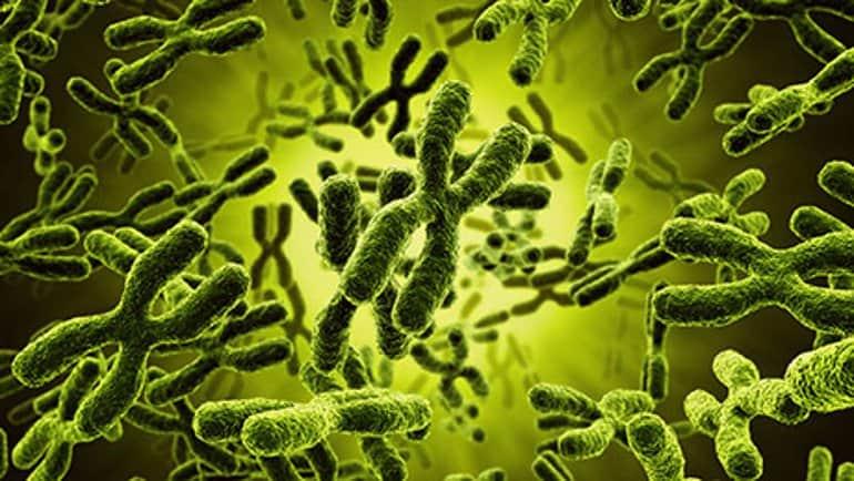 Genetics view in a microscope - NAET Dubai