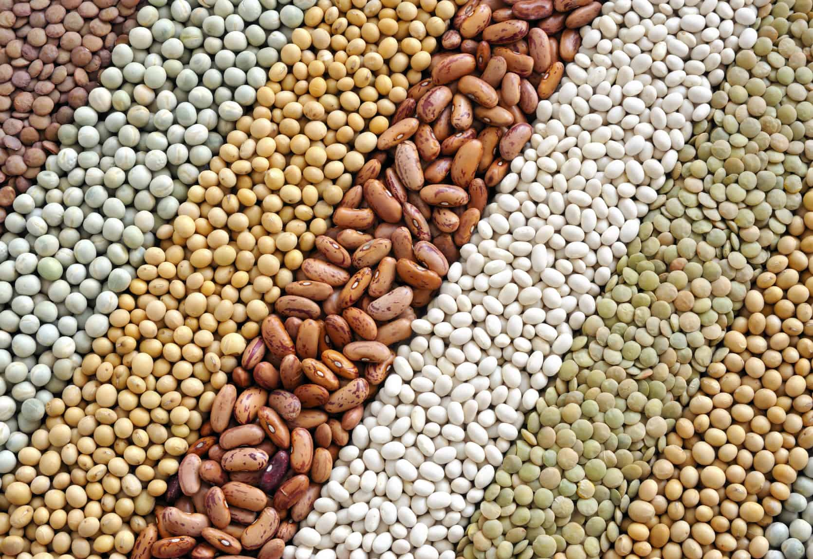 Kinds of Lentils - NAET Dubai
