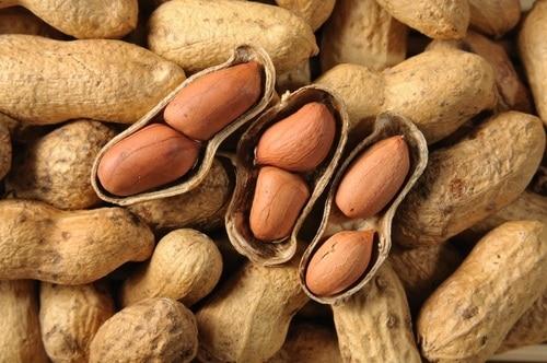 Nuts NAET Dubai