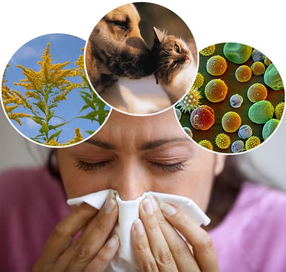 Allergy NAET Dubai