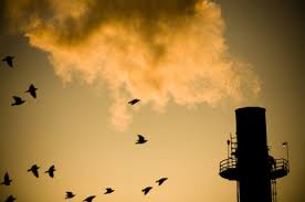 Exhaust Fumes NAET Dubai