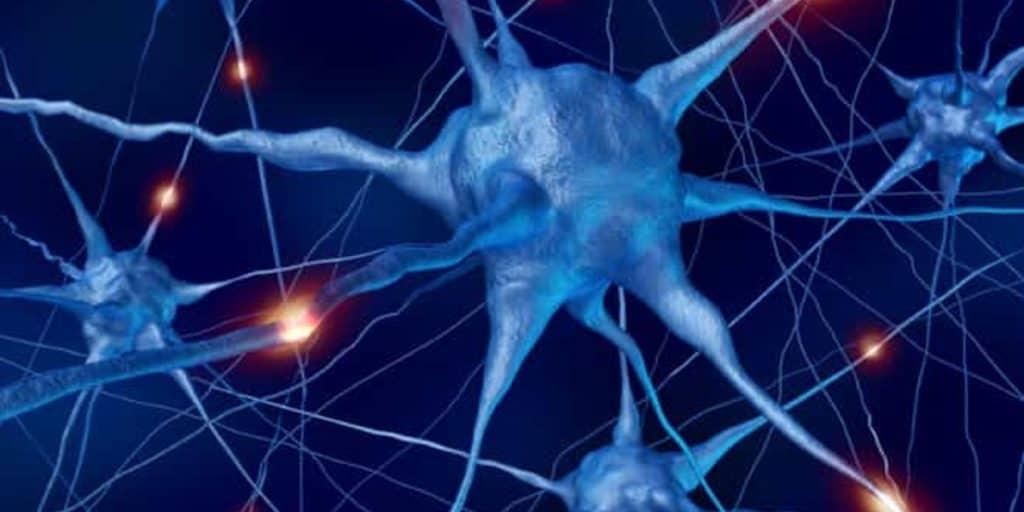 Neurons in the Brain-NAET Dubai